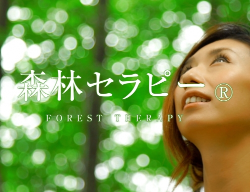 森林セラピー Forest therapy promotional video